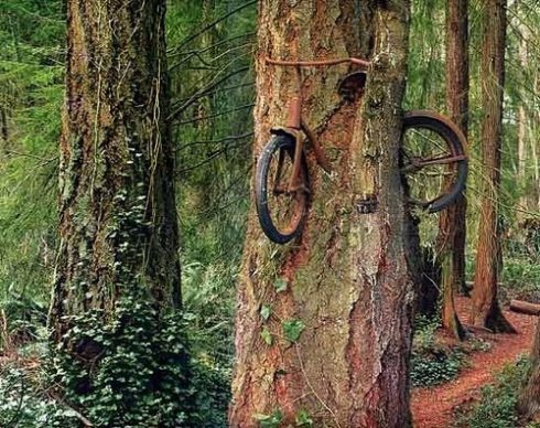 tree-grows-bike